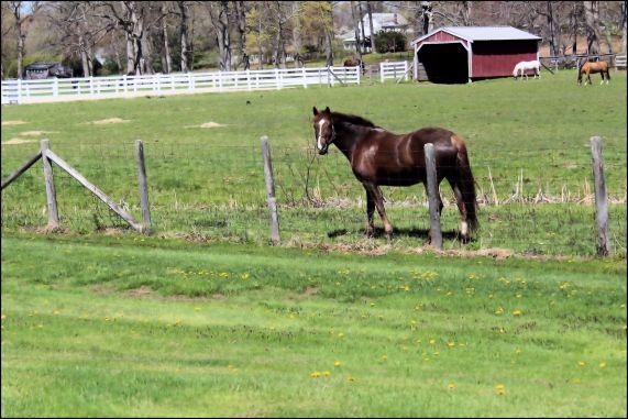Horses feeding 006a