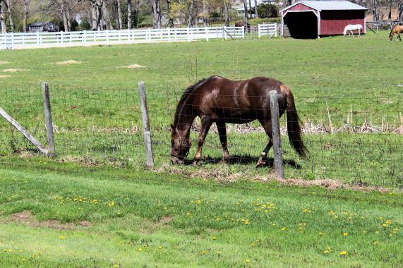 Horses feeding 008c