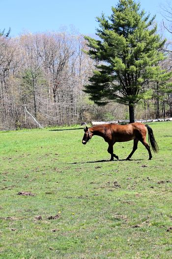 Horses feeding 017A