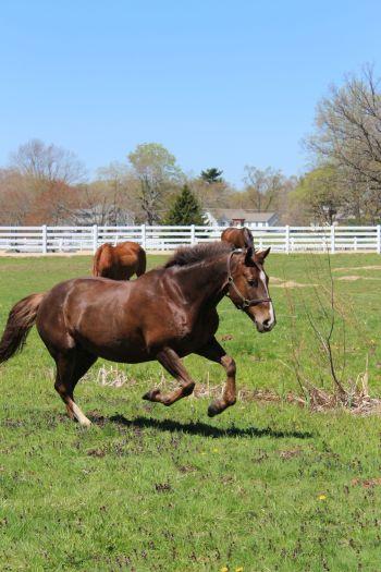 Horses feeding 023A