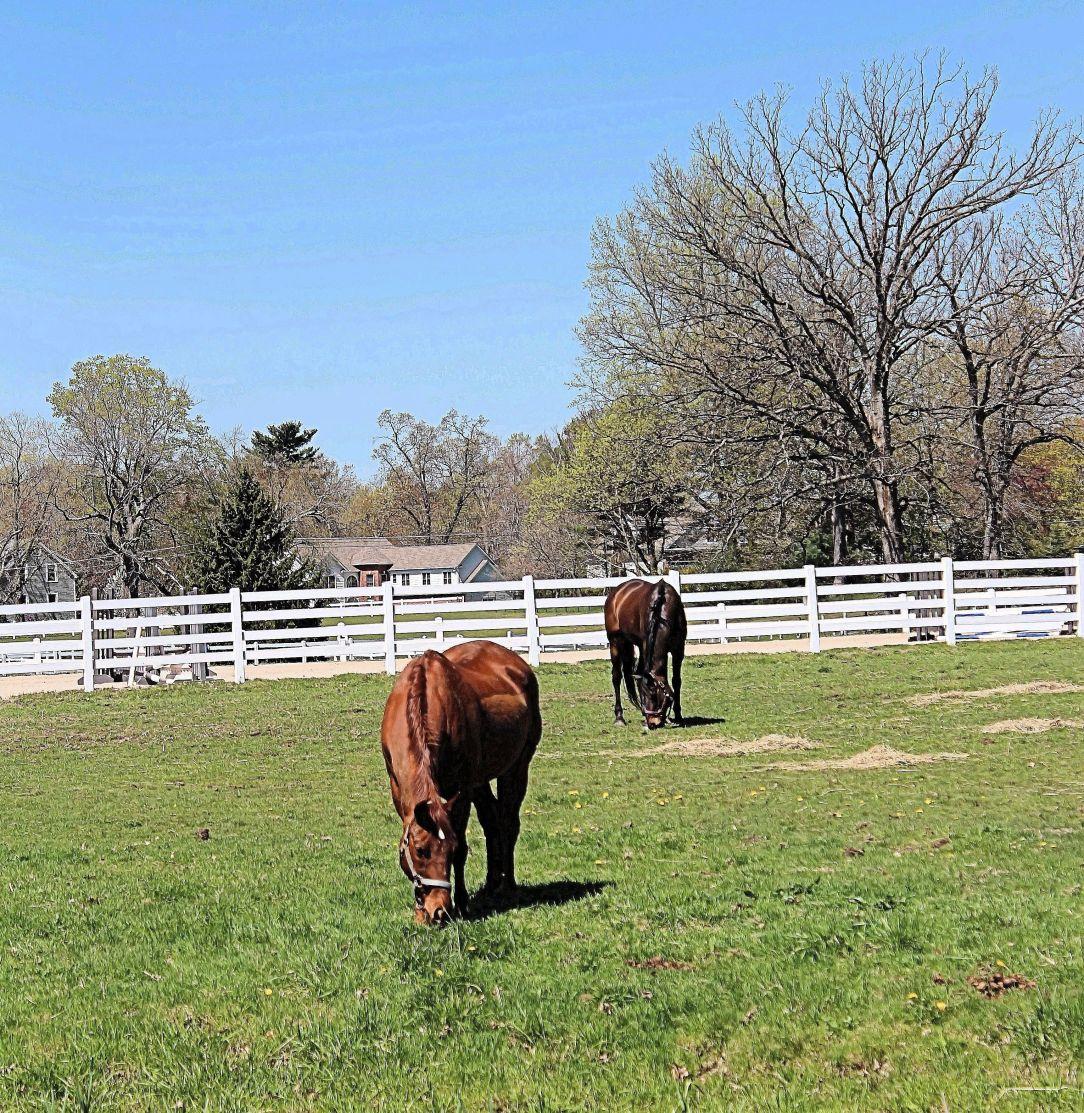 Horses feeding 031bc