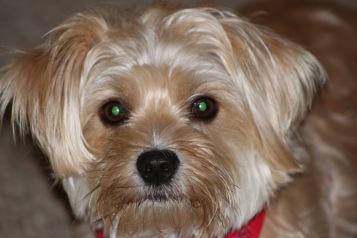 Green eyed: Dog daze 3--Photo Pincher