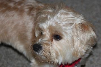 Unconcerned: Dog daze 2--Photo Pincher