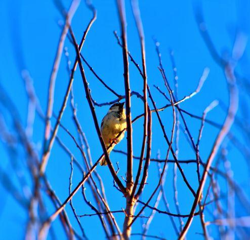Birdinatree