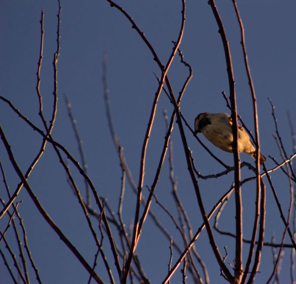 Birdinatree1
