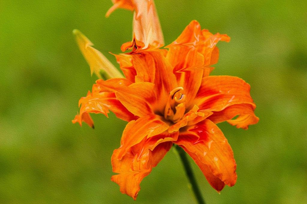Flowera3b (1 of 1)