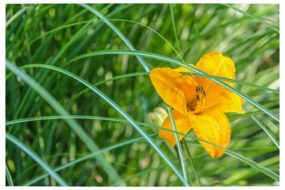 Summerflower (1 of 1)