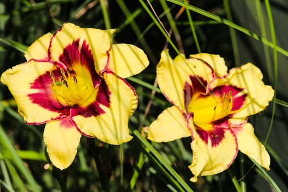 Summerflower1 (1 of 1)