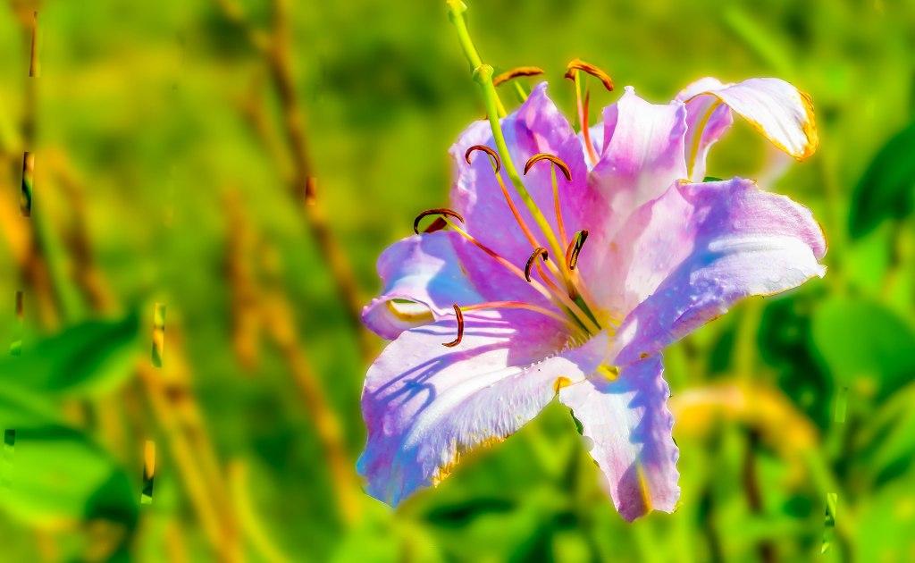 Summerflower3 (1 of 1)
