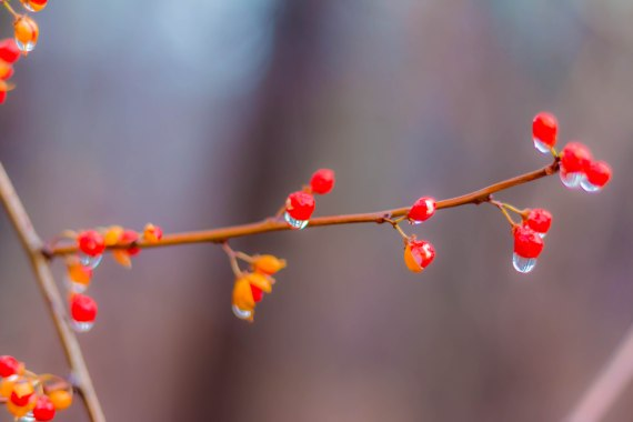 Droplets4a (1 of 1)