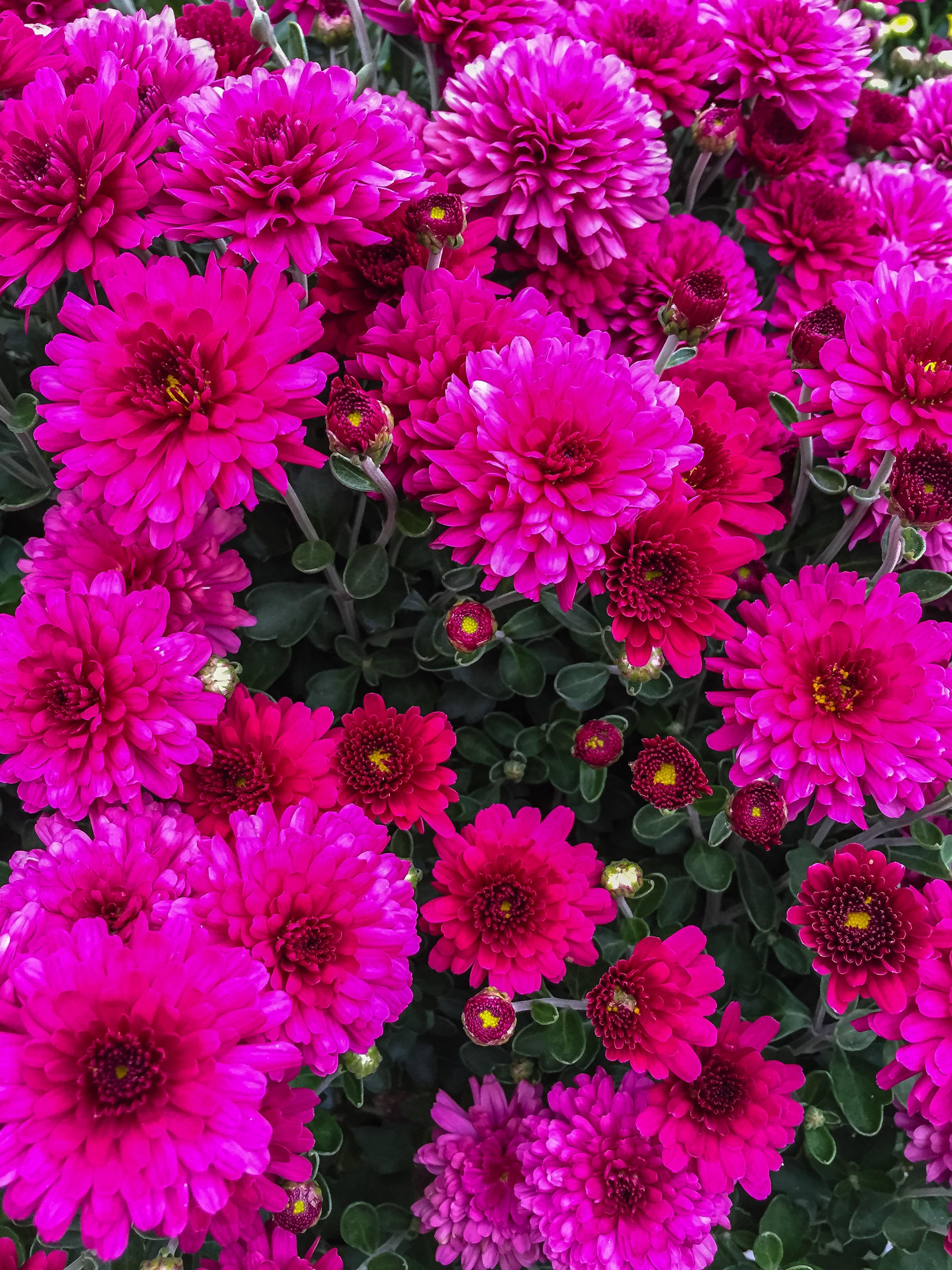 Fall flowers sweet life kitchens fall flower 0118 mightylinksfo