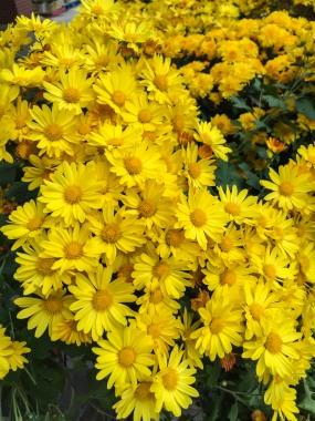 fall-flower-0119