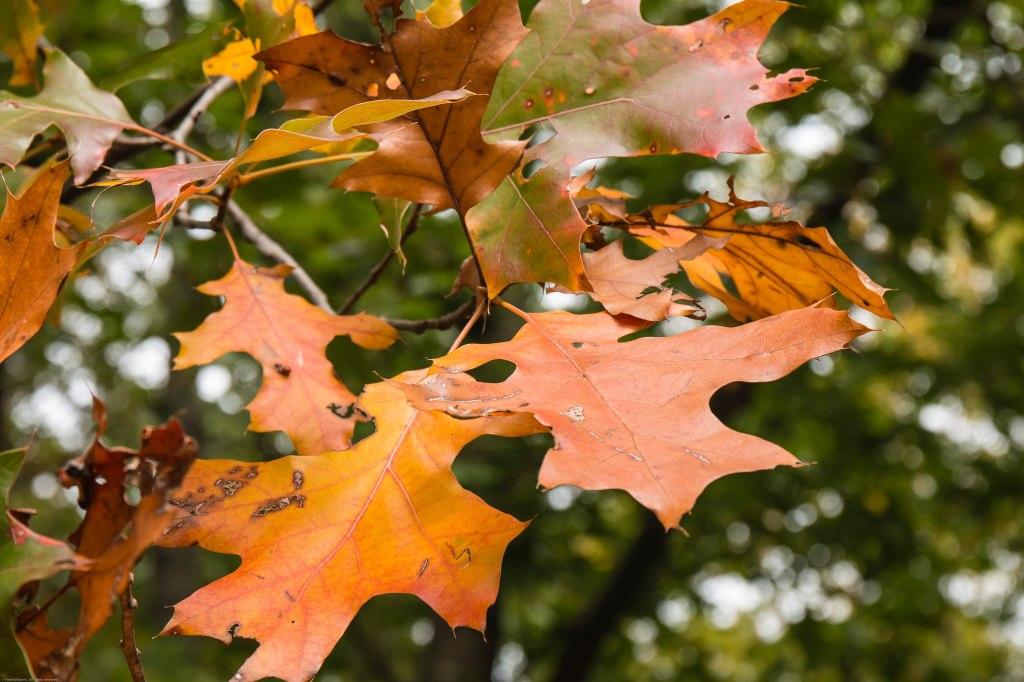 Fall-7