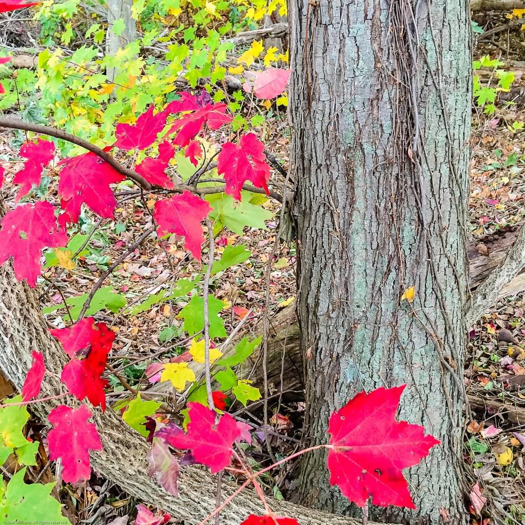 Fall pic-2
