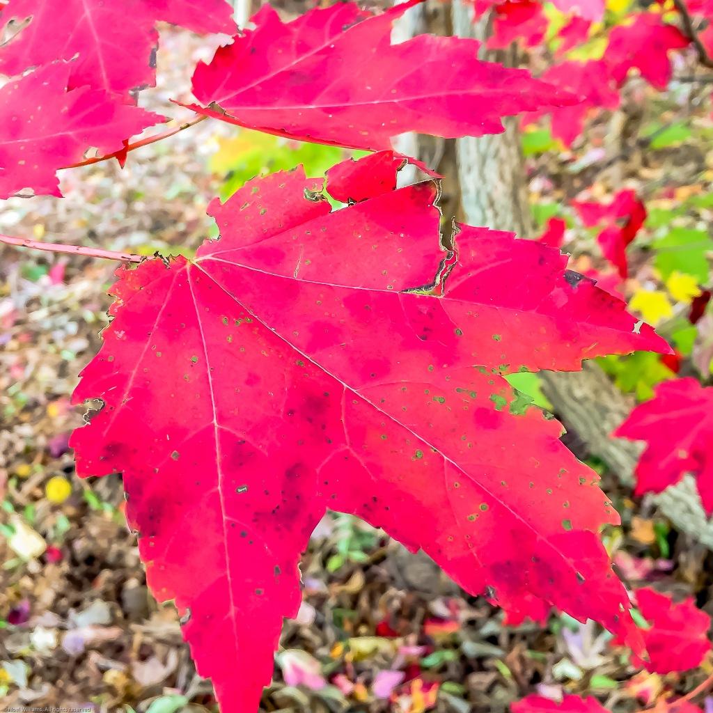 Fall pic-3