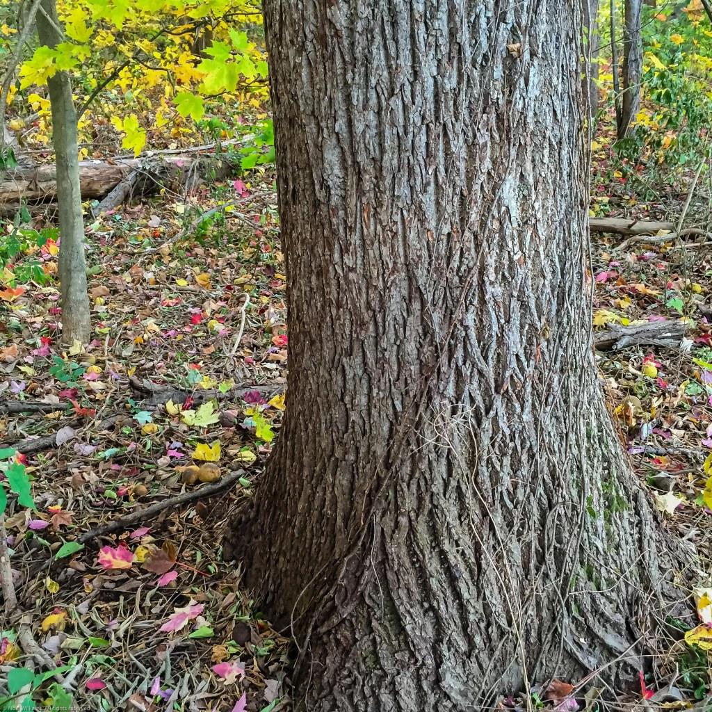 Fall pic-4