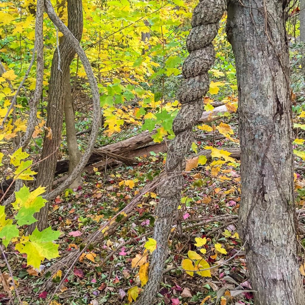 Fall pic-5