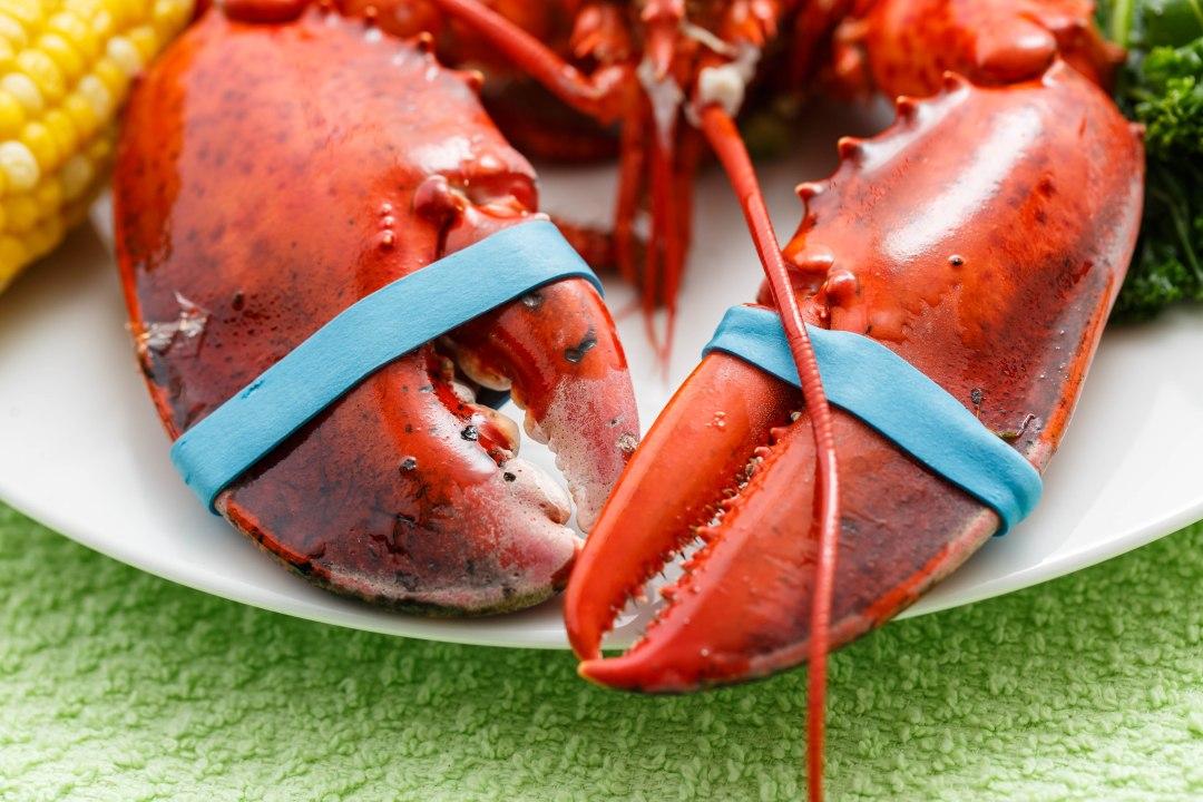 Lobster-1-5